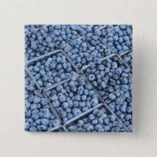 Rows of blueberries 15 cm square badge