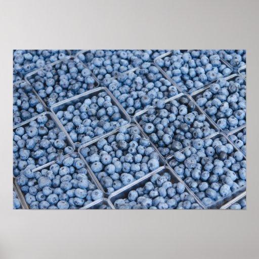 Rows of blueberries print