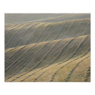 Rows of Harvested Wheat Field, Val d'Orcia, Poster