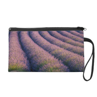Rows of lavender in Provence Wristlet