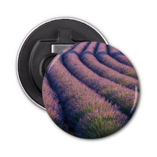 Rows of lavender in Provence Bottle Opener