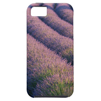 Rows of lavender in Provence Case For The iPhone 5