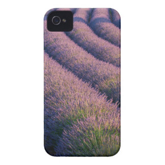 Rows of lavender in Provence Case-Mate iPhone 4 Cases