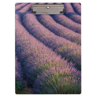 Rows of lavender in Provence Clipboard