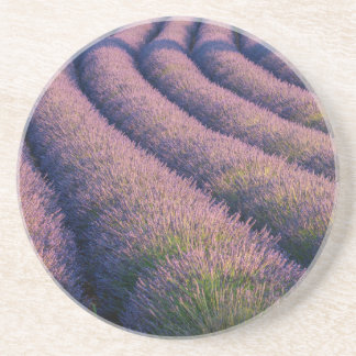 Rows of lavender in Provence Coaster