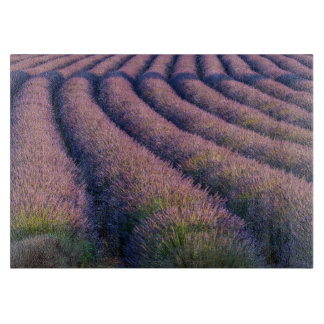 Rows of lavender in Provence Cutting Board