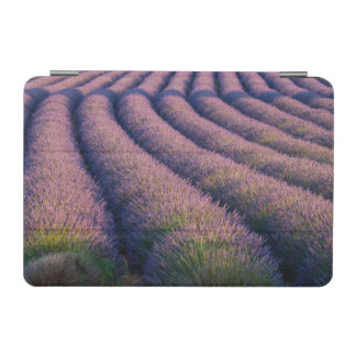 Rows of lavender in Provence iPad Mini Cover