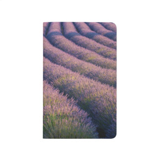 Rows of lavender in Provence Journal