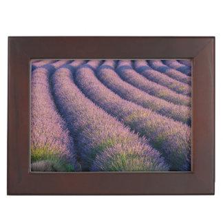 Rows of lavender in Provence Keepsake Box