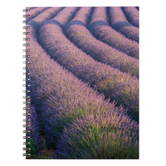 Rows of lavender in Provence Notebook