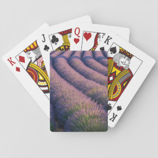 Rows of lavender in Provence Playing Cards