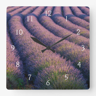 Rows of lavender in Provence Square Wall Clock