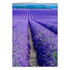 Rows of Lavender, Provence, France Card
