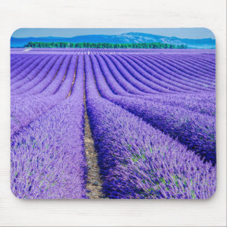 Rows of Lavender, Provence, France Mouse Mat