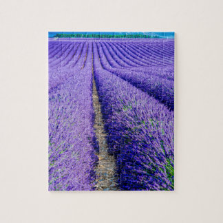 Rows of Lavender, Provence, France Puzzles