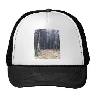 Rows of trees cap
