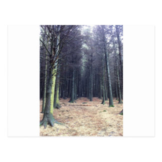 Rows of trees postcard