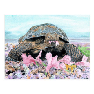 Roxy the Turtle Postcard
