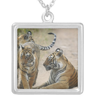 Royal Bengal Tiger and young ones, Ranthambhor Square Pendant Necklace