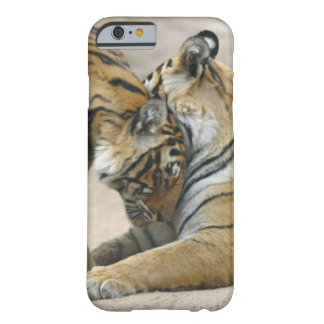 Royal Bengal Tiger and young ones - touching Barely There iPhone 6 Case