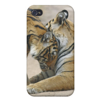 Royal Bengal Tiger and young ones - touching iPhone 4 Cases