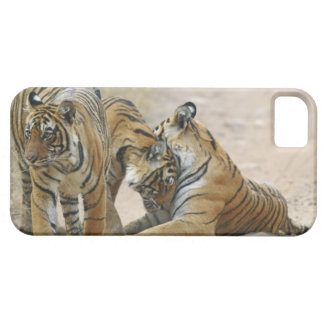 Royal Bengal Tiger and young ones - touching iPhone 5 Cover