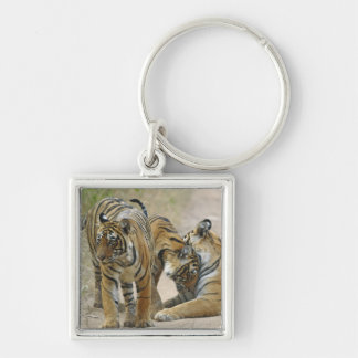 Royal Bengal Tiger and young ones - touching Key Ring
