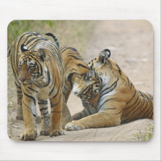 Royal Bengal Tiger and young ones - touching Mouse Mat