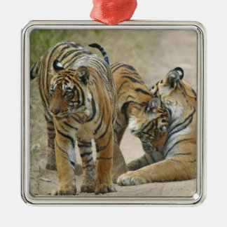 Royal Bengal Tiger and young ones - touching Silver-Colored Square Decoration