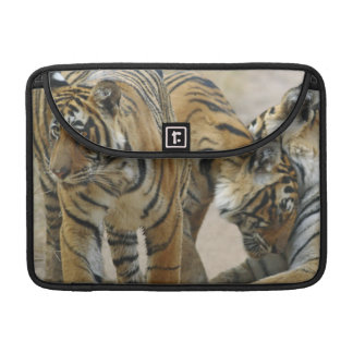 Royal Bengal Tiger and young ones - touching Sleeve For MacBook Pro