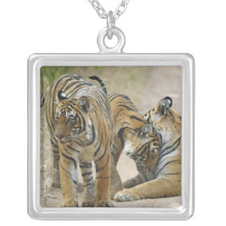 Royal Bengal Tiger and young ones - touching Square Pendant Necklace