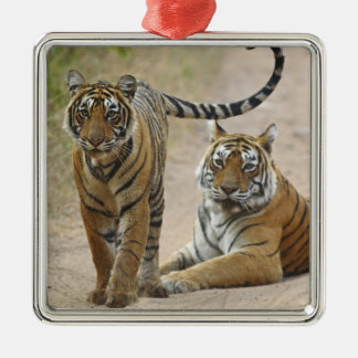 Royal Bengal Tiger and young, Ranthambhor Silver-Colored Square Decoration