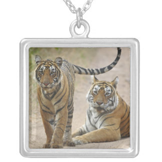 Royal Bengal Tiger and young, Ranthambhor Square Pendant Necklace