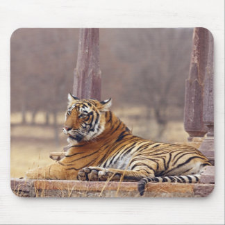 Royal Bengal Tiger at the ceaph, Mouse Mat