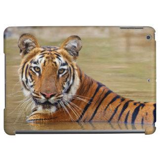 Royal Bengal Tiger at the waterhole