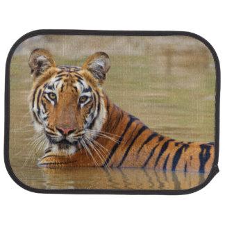 Royal Bengal Tiger at the waterhole Car Mat