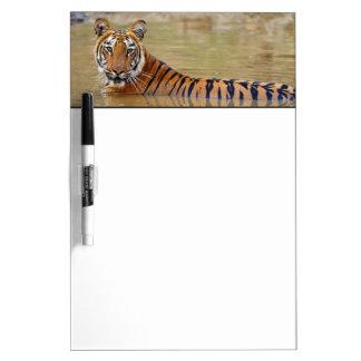 Royal Bengal Tiger at the waterhole Dry Erase Board
