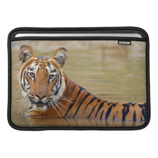Royal Bengal Tiger at the waterhole Sleeve For MacBook Air