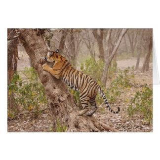 Royal Bengal Tiger climbing up the tree, Greeting Card