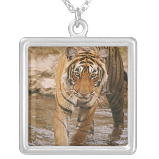 Royal Bengal Tiger coming out of jungle pond, Silver Plated Necklace