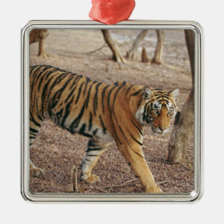 Royal Bengal Tiger coming out of woodland, Christmas Ornament