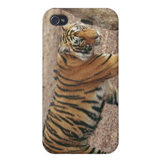 Royal Bengal Tiger coming out of woodland, iPhone 4 Case