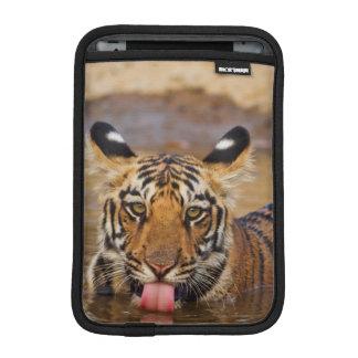 Royal Bengal Tiger cub, drinking water iPad Mini Sleeve