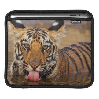 Royal Bengal Tiger cub, drinking water iPad Sleeves