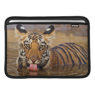 Royal Bengal Tiger cub, drinking water Sleeves For MacBook Air