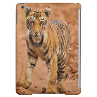 Royal Bengal Tiger cub on the move