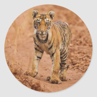 Royal Bengal Tiger cub on the move Classic Round Sticker
