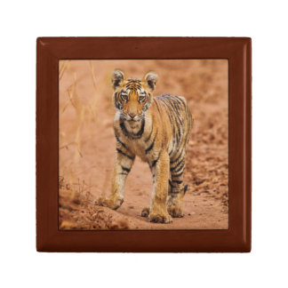 Royal Bengal Tiger cub on the move Small Square Gift Box