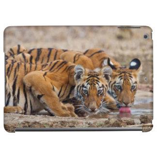 Royal Bengal Tiger cubs at the waterhole
