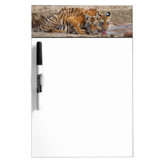 Royal Bengal Tiger cubs at the waterhole Dry Erase Board